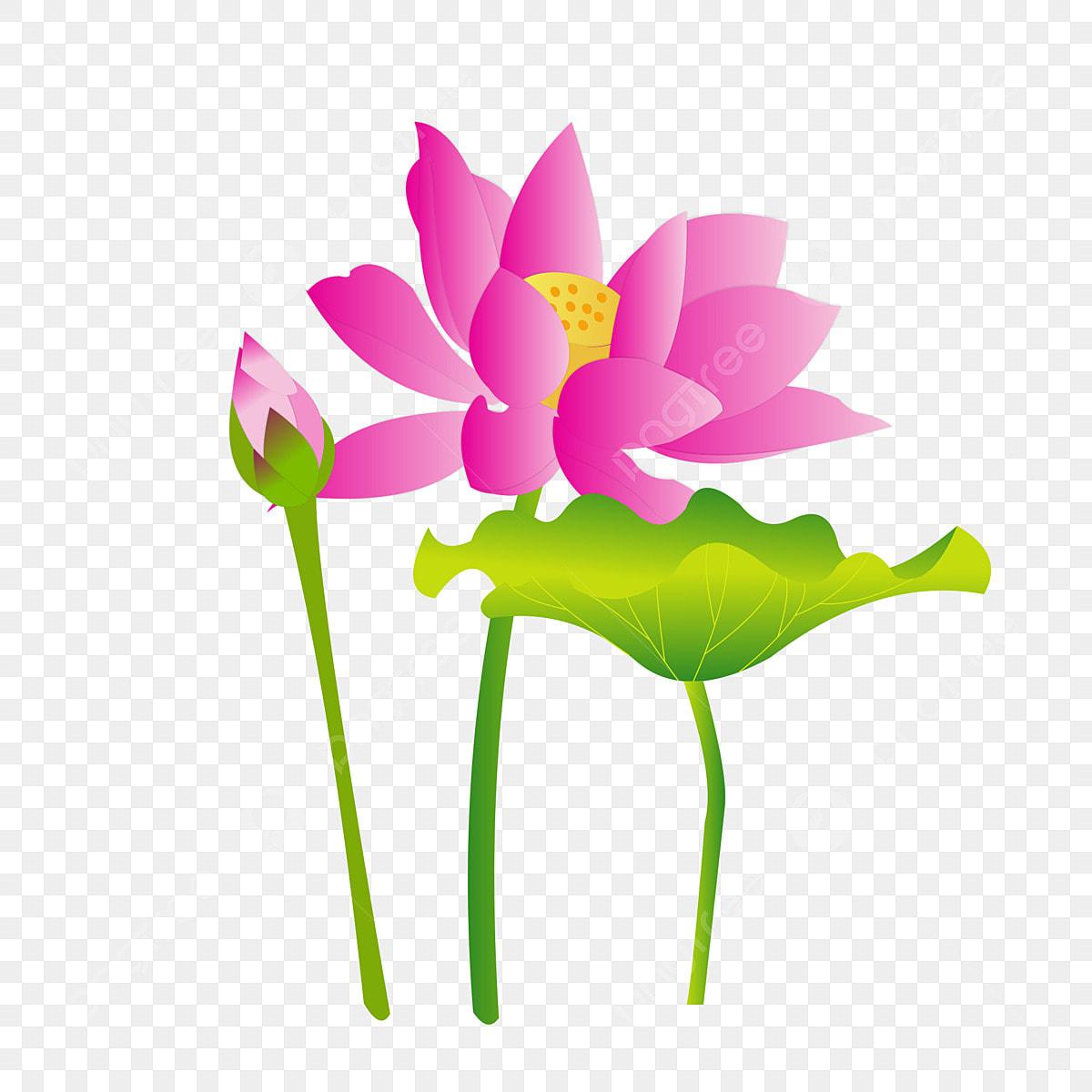élément De Lotus Dessiné à La Main Simple Lotus Conception