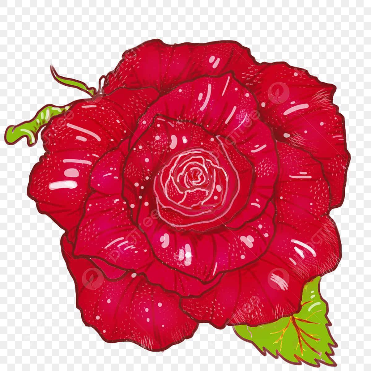 Fond Transparent Peint à La Main De Fleurs Rose Rouge