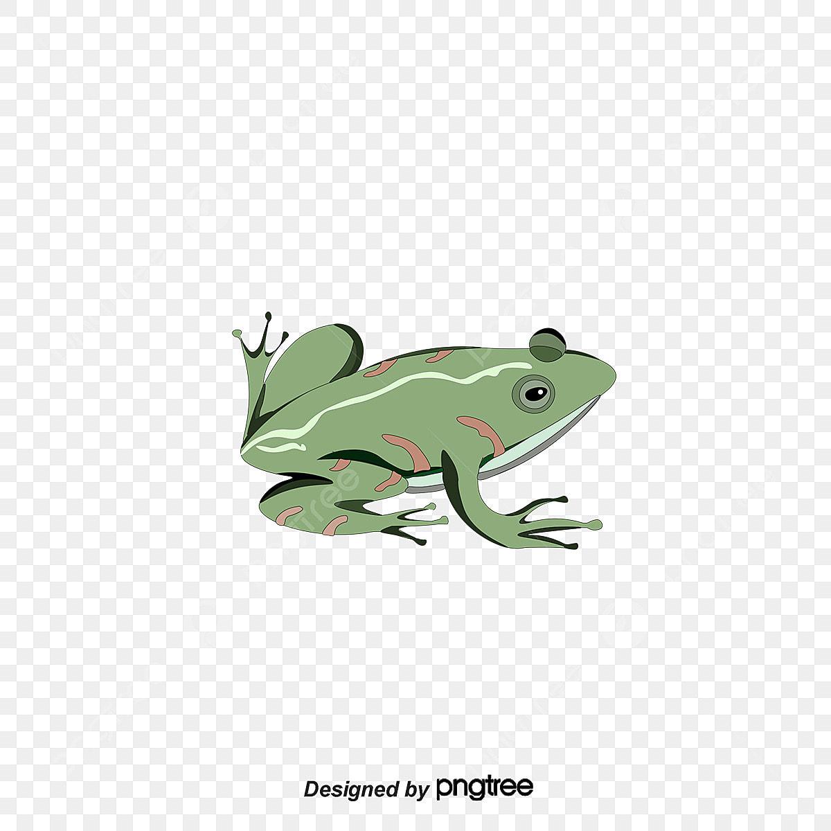 47 Gambar Hewan Katak Kartun HD