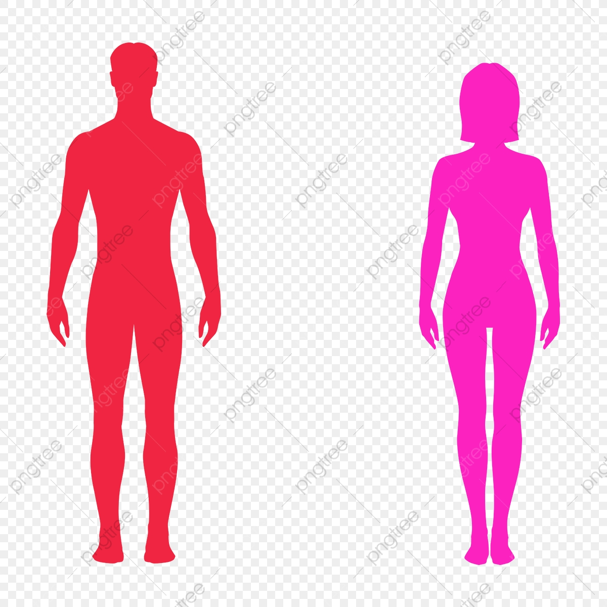 male female bodies body bodies png and vector with transparent background for free download https pngtree com freepng male female bodies 4124284 html