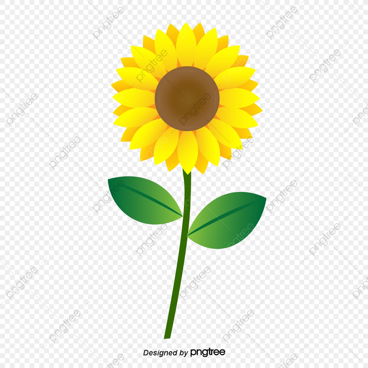 Sunflower Flowers Pictures Free | Best Flower Site