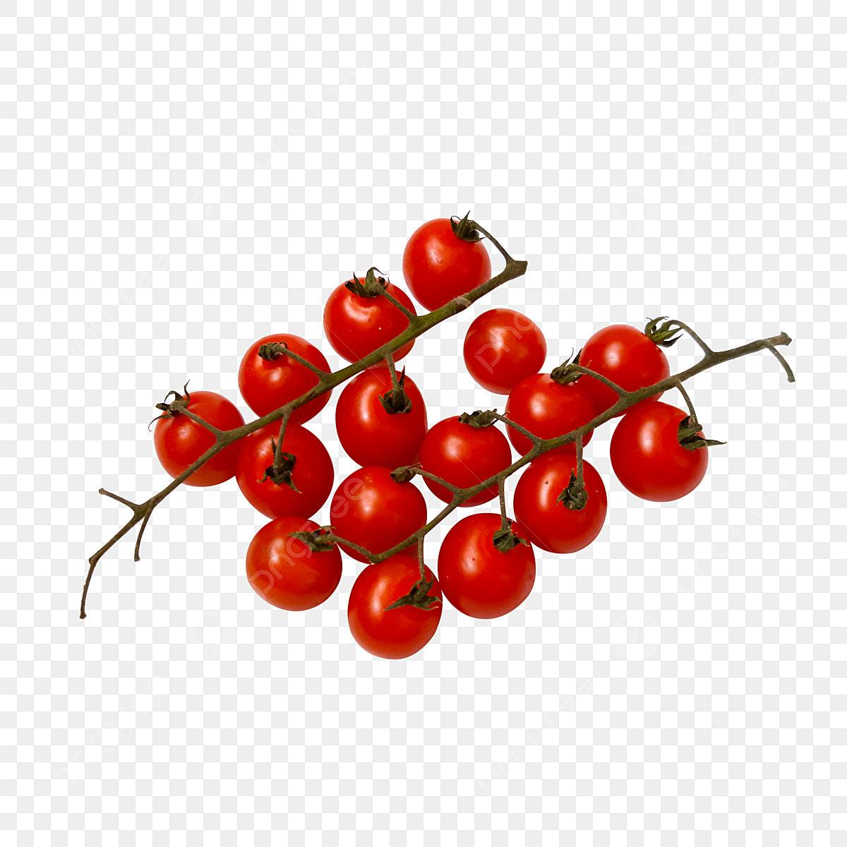 Tomate Cerise Cherry Tomate Cerise Red Fichier Png Et Psd Pour