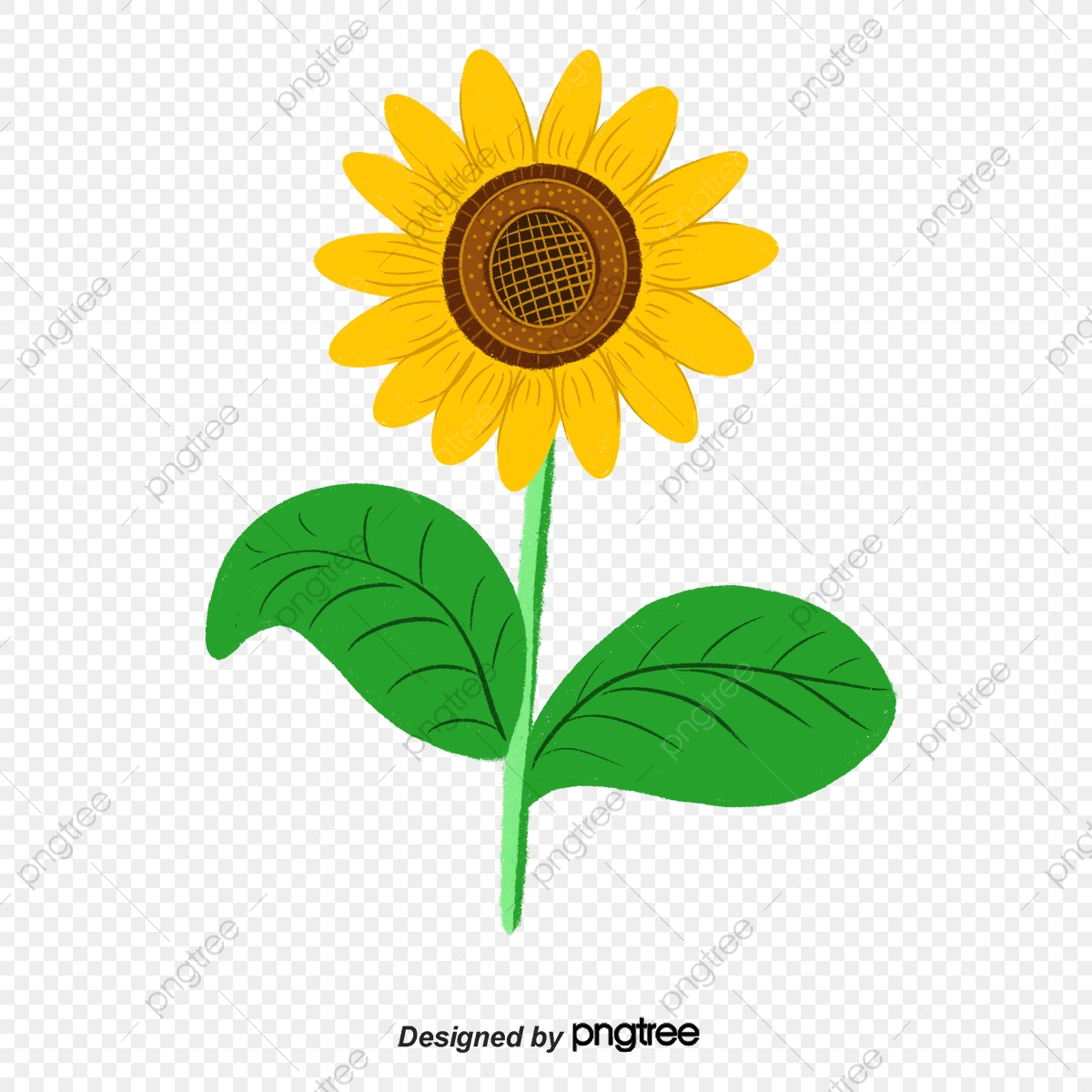 Colorful Cartoon Illustration Of Sunflower Elements Cartoon