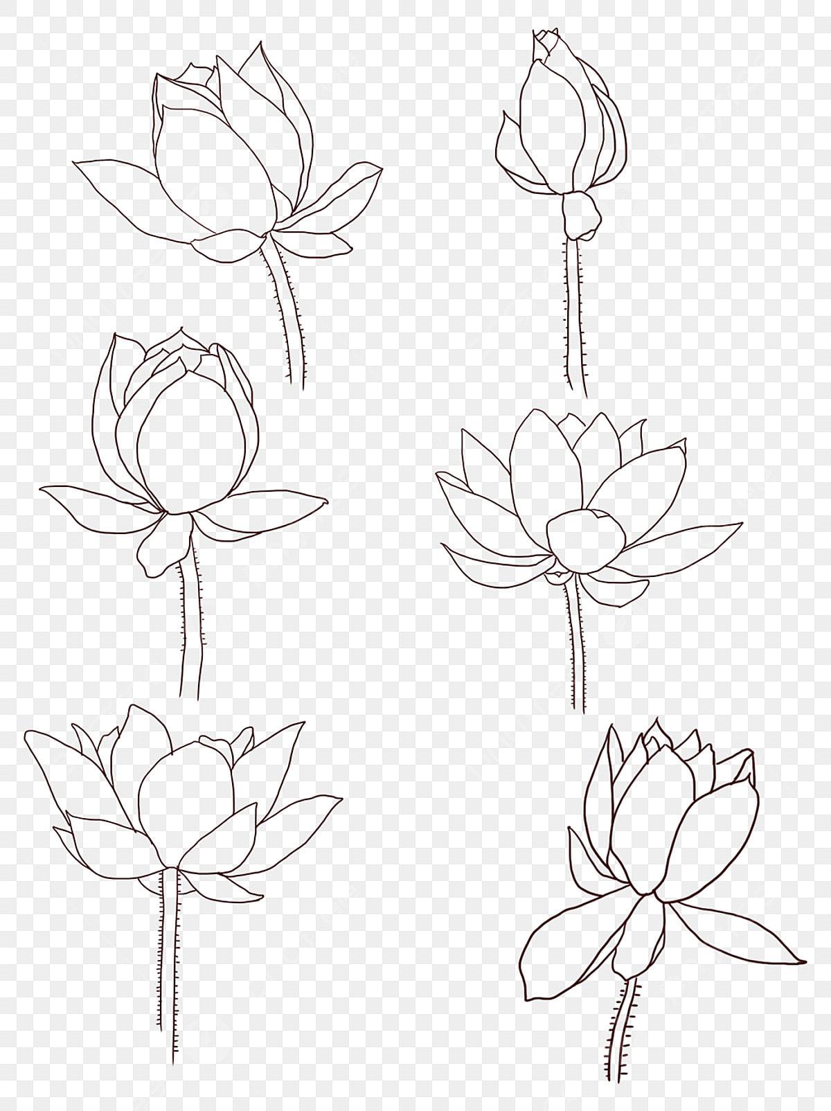 Hand Drawn Simple Line Flower Lotus Hand Painted Flowers Jane