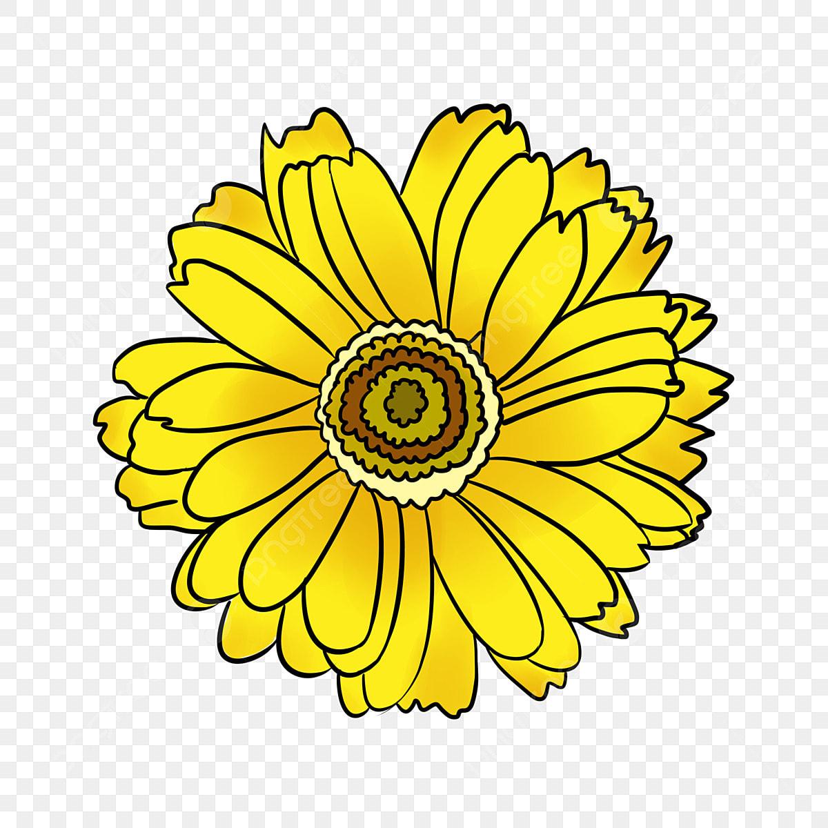 Bunga Matahari Kuning Yang Dilukis Dengan Tangan Bunga Matahari Bunga Matahari Lukisan Tangan Png Transparan Gambar Clipart Dan File Psd Untuk Unduh Gratis