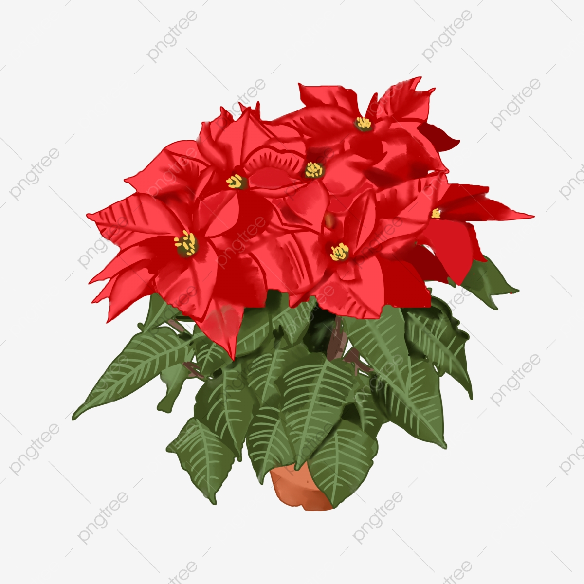 Christmas Poinsettia Clipart png download - 6414*5697 - Free Transparent  Poinsettia png Download. - CleanPNG / KissPNG