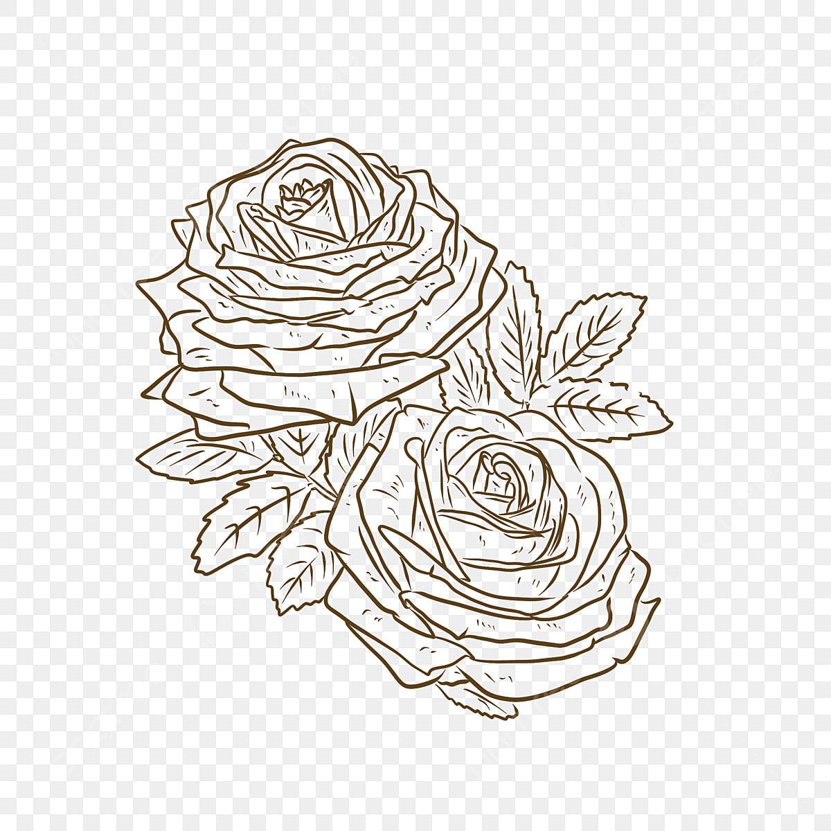 Dessin Blanc Vecteur Materiel De Fleur Rose Dessin Blanc Modele