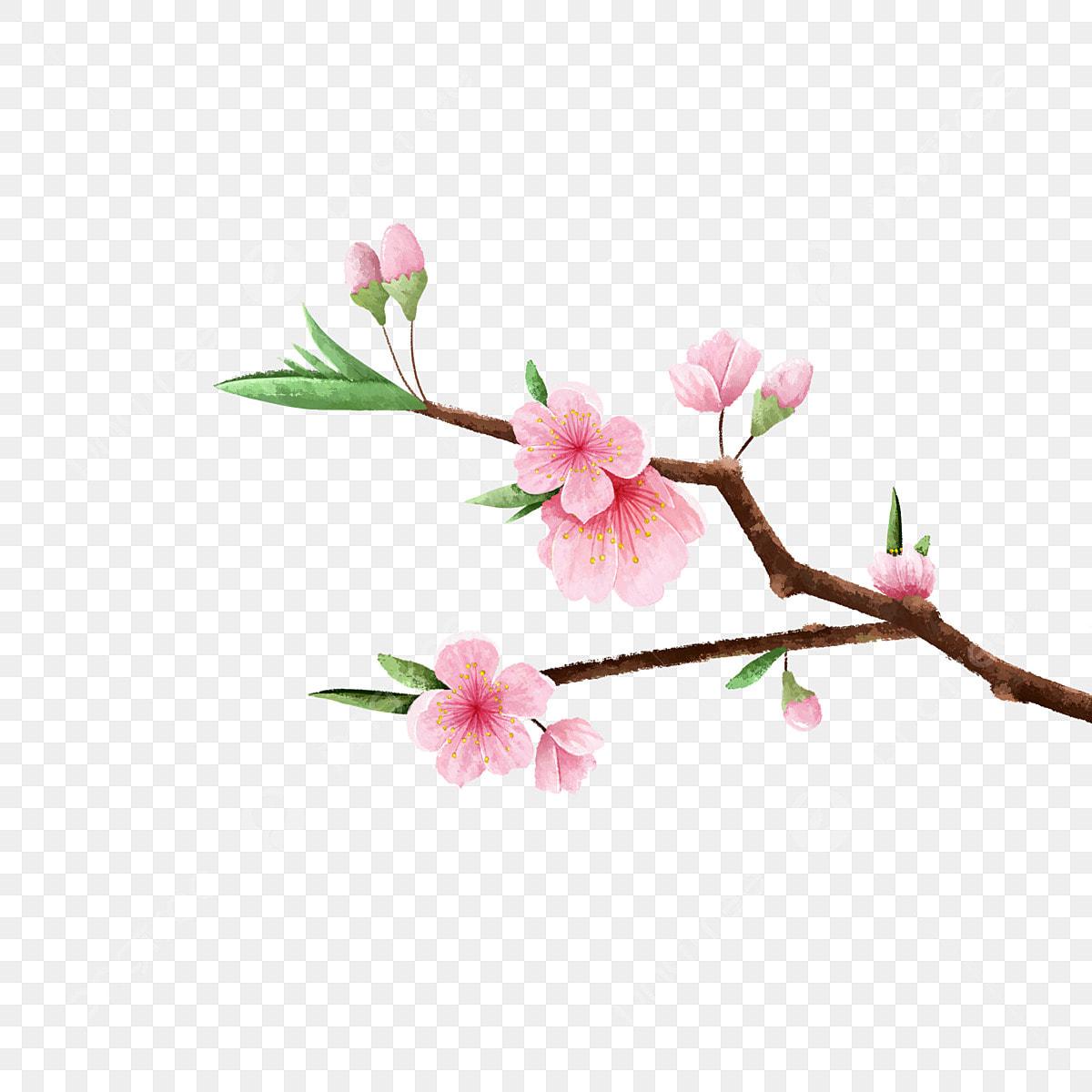 Image De Parterre De Fleurs branches fleur de pêcher feuilles parterre de fleurs