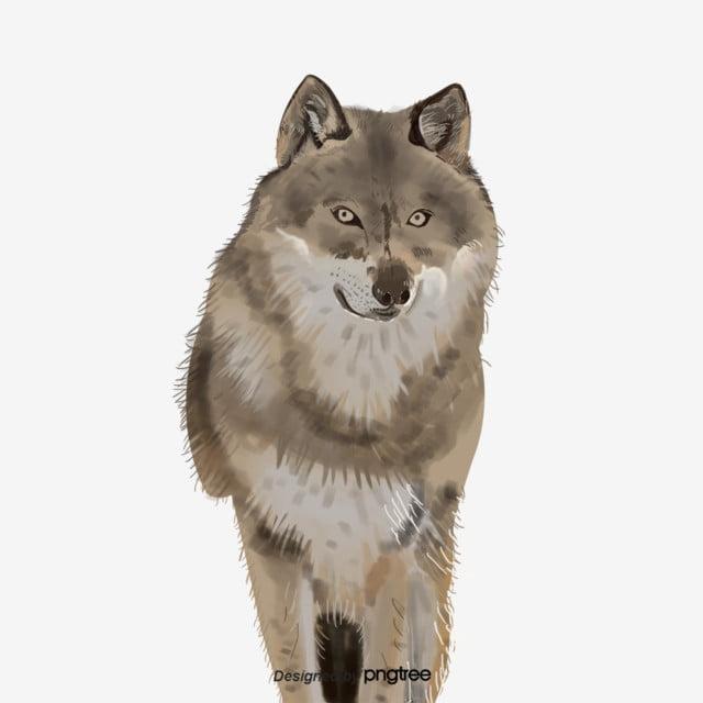 Phaiwan wolf