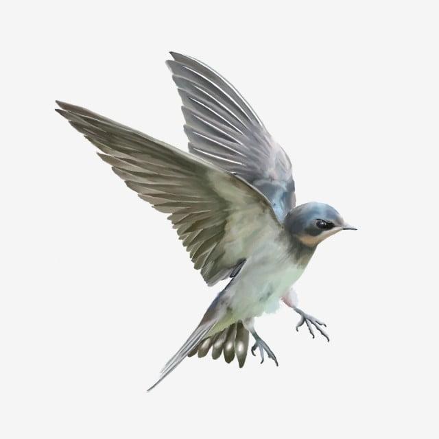 Cute Vivid Flying Bird, Cute Bird, Flying Bird, Bird PNG Transparent