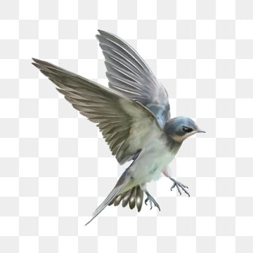 Bird PNG Images, Download 16,243 Bird PNG Resources with