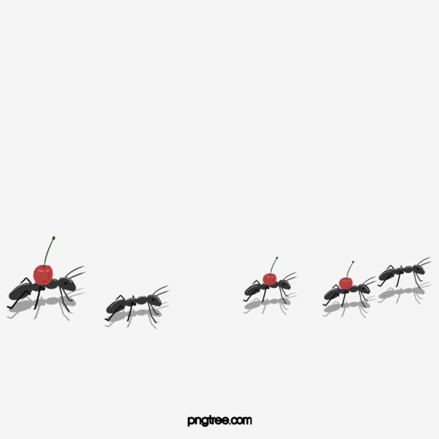 Black Ant Carrying Fruit Black Ant Handling Png Transparent Clipart Image And Psd File For Free Download