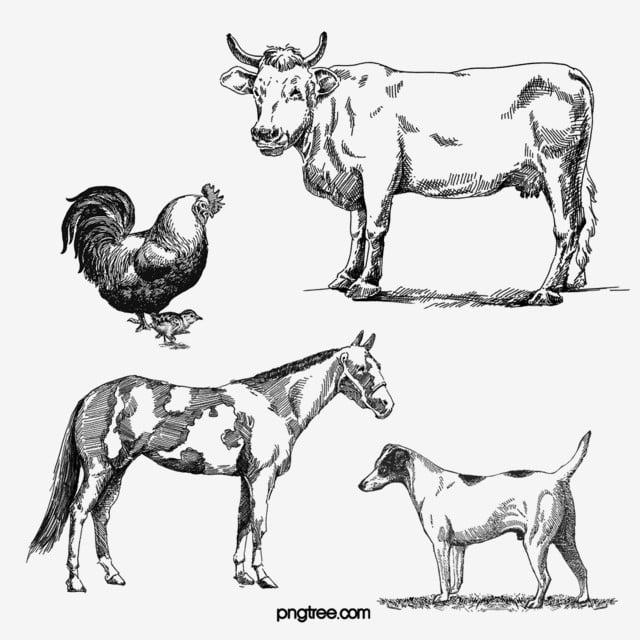 Granja Animal Vaca Gallo Perro Línea Dibujo Blanco Y Negro