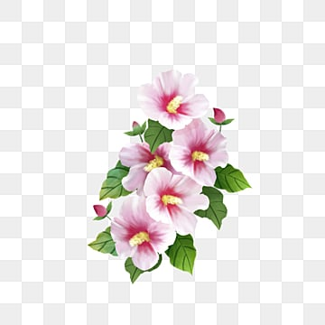 Hibiscus Flower PNG Images | Vector and PSD Files | Free