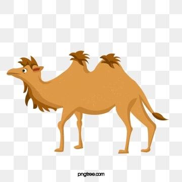 Camel clipart Stock Photos, Royalty Free Camel clipart Images    Depositphotos®