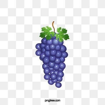 87 Gambar Anggur Tidak Berwarna Terbaik