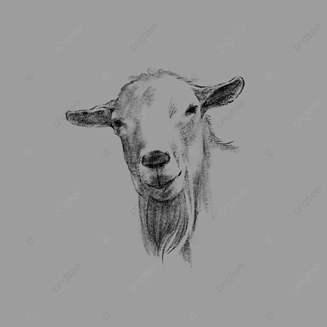 Black White Hand Drawn Line Drawing Of A Sheeps Head, Sheep