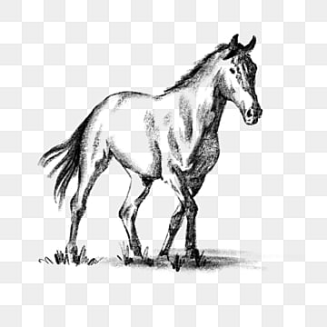 Free PNG Wild Horse Clip Art Download - PinClipart