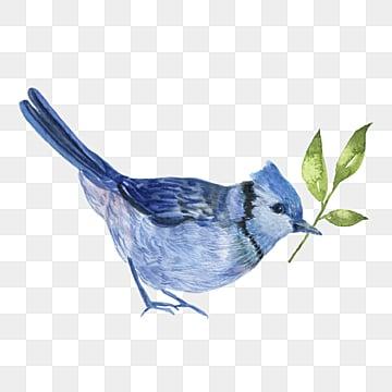 cute bird hand drawn cartoon watercolor elements, Bird, Leaf, Blue PNG and PSD