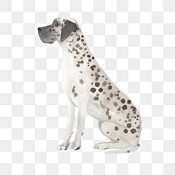 dalmatian black and white illustration watercolor cartoon animal, Dog, Watercolor, Spotted Dog PNG and PSD