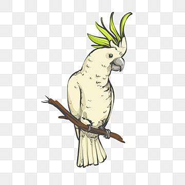 green cockatoo hand drawn cartoon element, Cartoon, Bird, Animal PNG and PSD