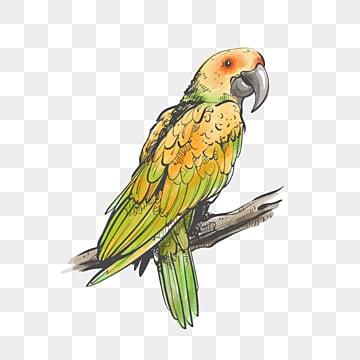 green yellow parrot watercolor hand drawn cartoon animal elements, Little Bird, Parrot, Cartoon PNG and PSD