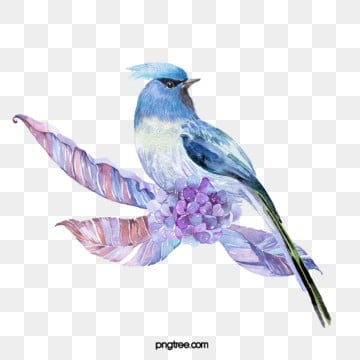 hand drawn bird floral watercolor elements, Bird, Leaf, Flowers And Plants PNG and PSD