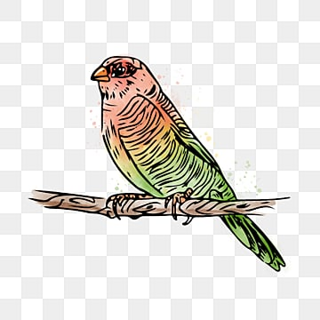 red green gradient parrot hand drawn elements, Parrot, Hand Painted, Animal PNG and PSD