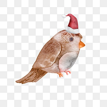 watercolor bird christmas hat element, Cartoon, Little Bird, Illustration PNG and PSD