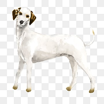 white dog watercolor cartoon illustration element, White, Animal, Dog PNG and PSD