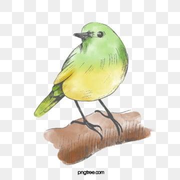 yellow green bird hand drawn elements, Little Bird, Yellow, Cartoon PNG and PSD