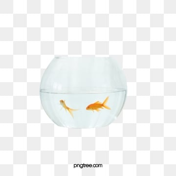 Белая прозрачная золотая рыбка, аквариум, прозрачный, золотая рыбка PNG и PSD
