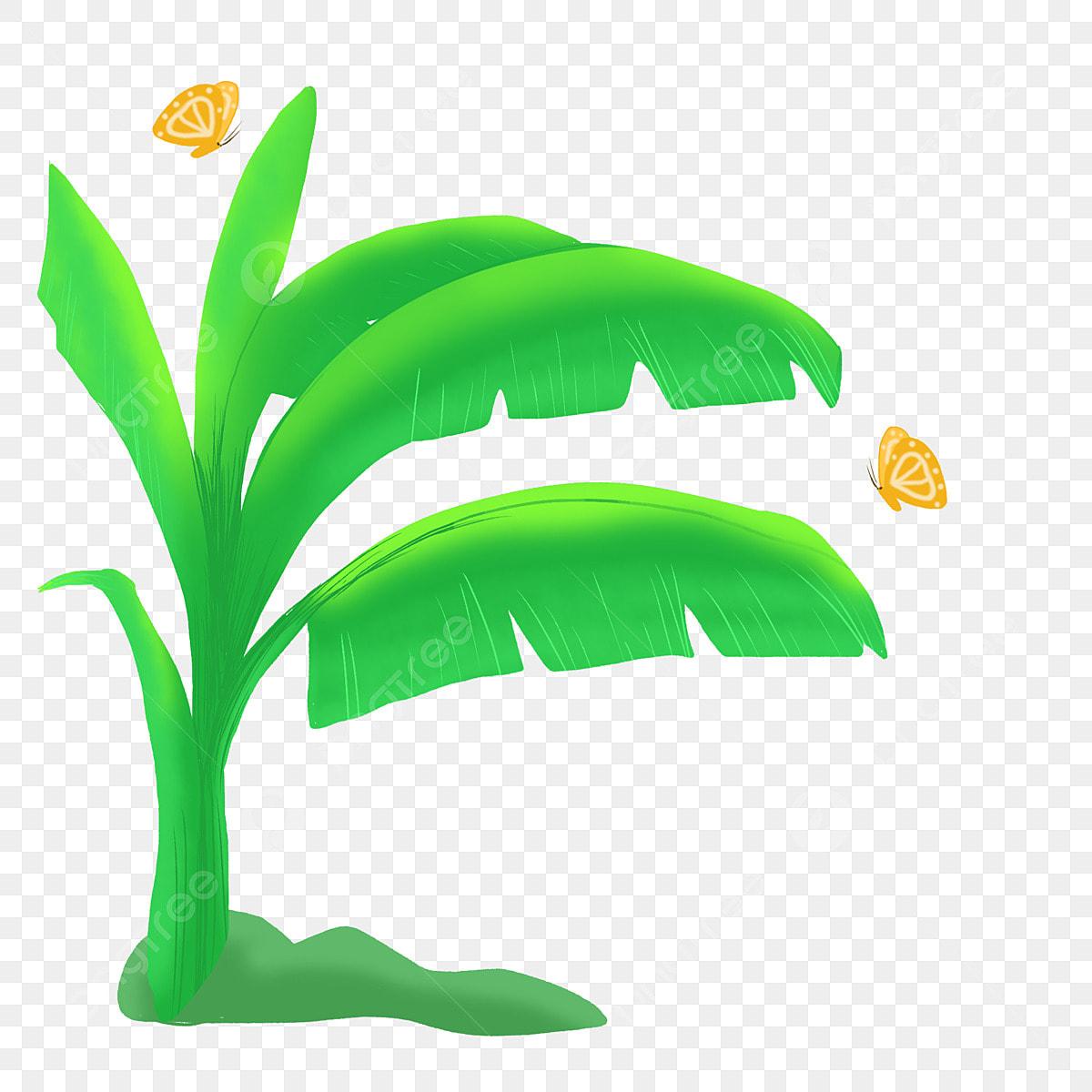 شجرة الموز