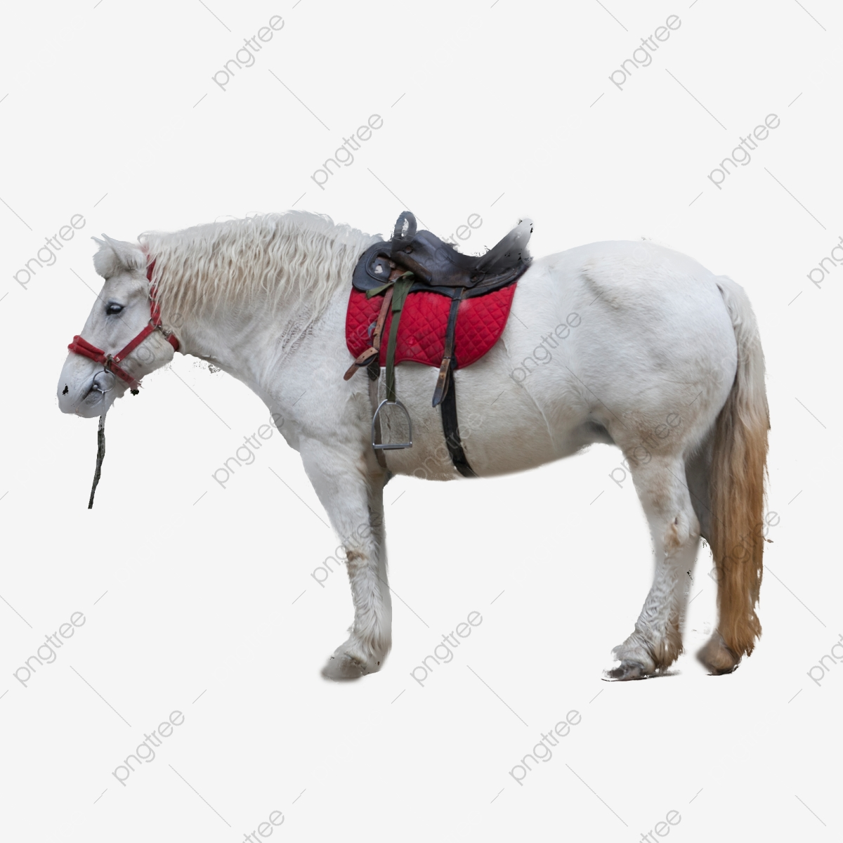 A Docile Beautiful White Horse Horse Clipart Ili Horse Animal Png Transparent Clipart Image And Psd File For Free Download