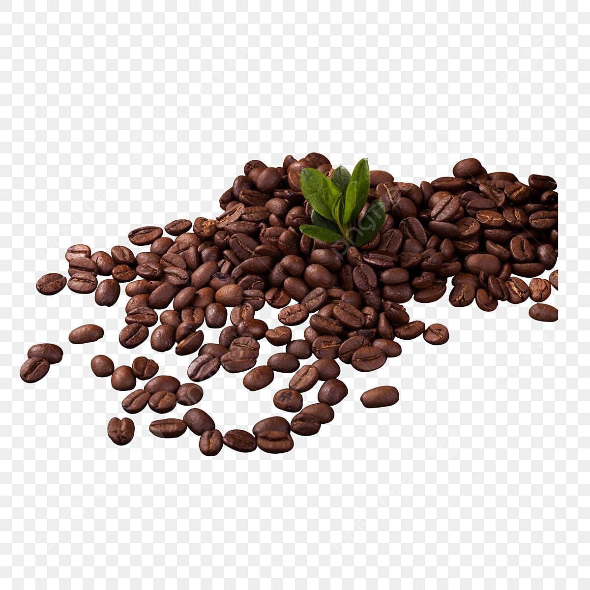 gambar sekumpulan biji kopi mentah kopi biji kopi kopi bahan kopi panas png dan psd untuk muat turun percuma https ms pngtree com freepng bunch of coffee raw coffee beans 4418656 html
