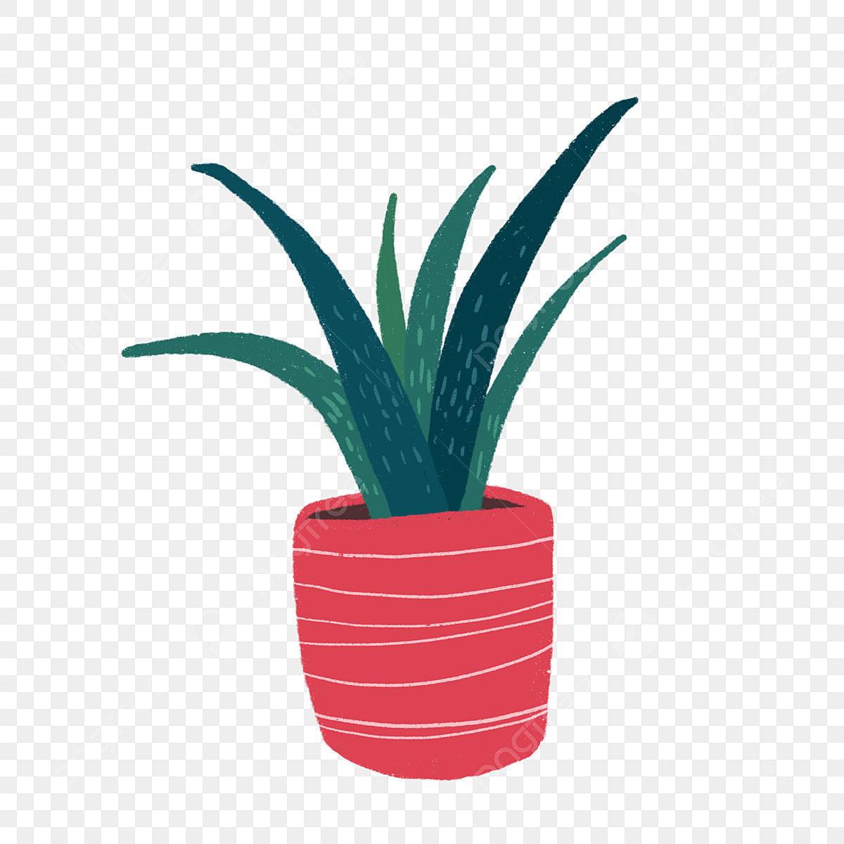 Aloès Plante Frais Vert Décoration Vie Dessin Fichier Png