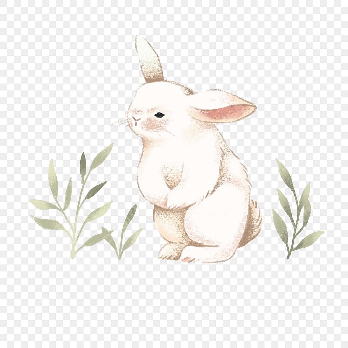 Clipart rabbit snowshoe rabbit, Clipart rabbit snowshoe rabbit Transparent  FREE for download on WebStockReview 2020