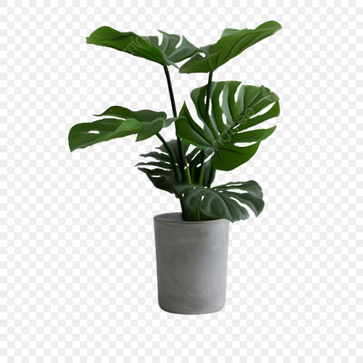 Plante Haute En Pot plantes en pot plantes vertes d'intérieur plantes en pot