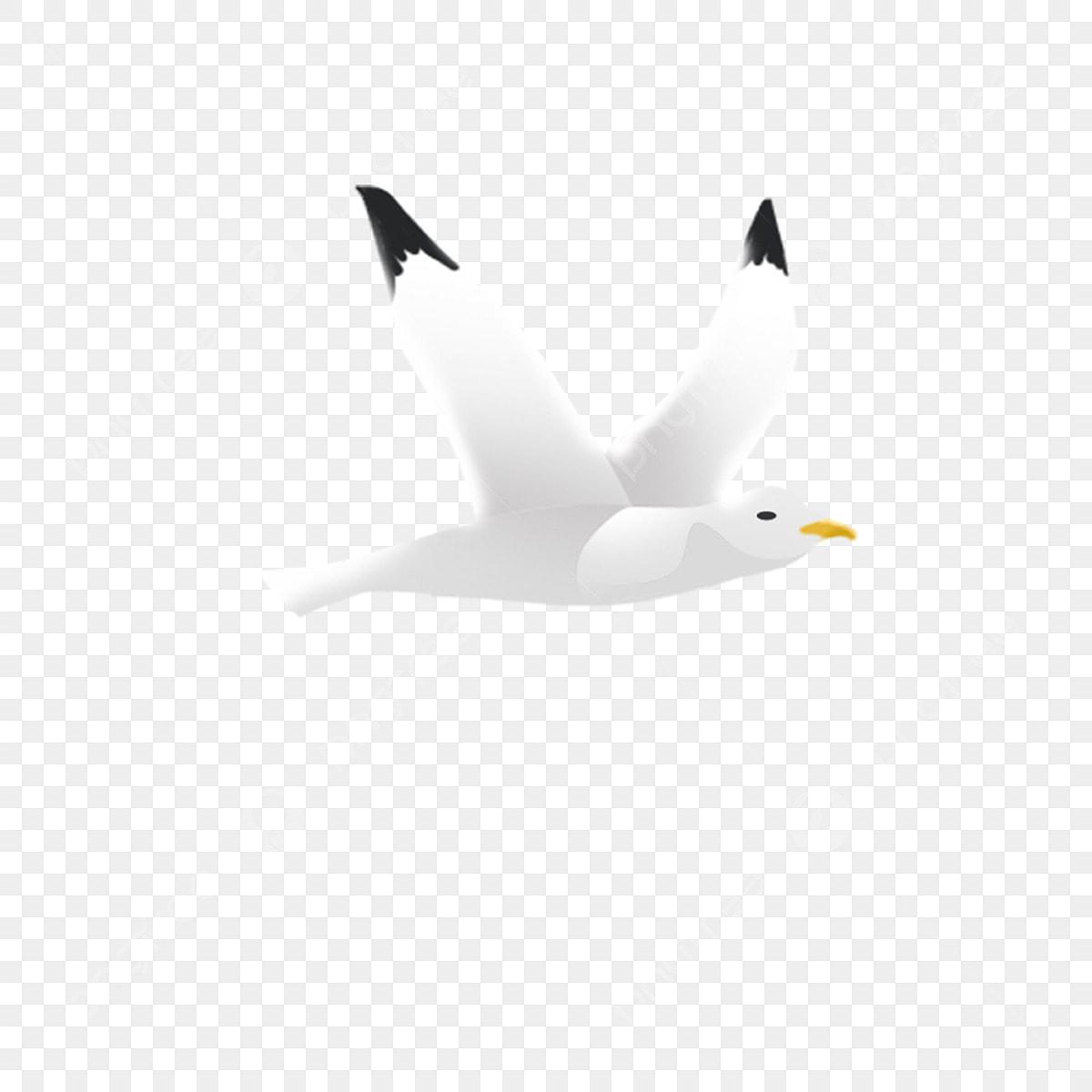 Burung Terbang Burung Camar Burung Ilustrasi Kartun Muat