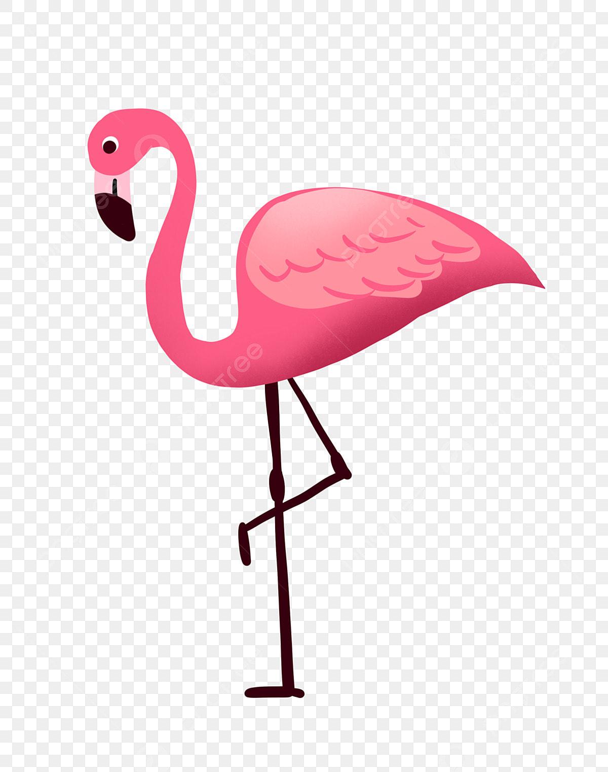 Rose Flamant Rose Oiseau Dessin Animé Flamant Rose Dessin