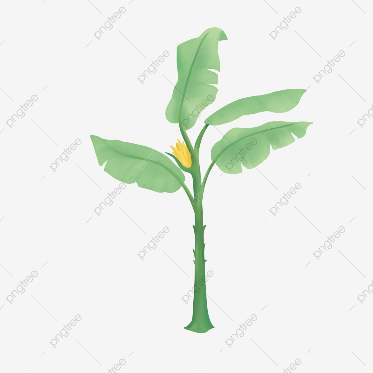 Fresh Plantain Tree Plant Illustration Fresh Banana Tree Banana Leaf Png Transparent Clipart Image And Psd File For Free Download