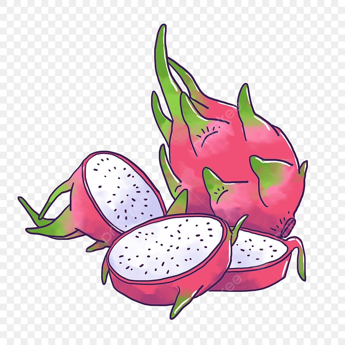 драконий фрукт картинки нарисовать передать