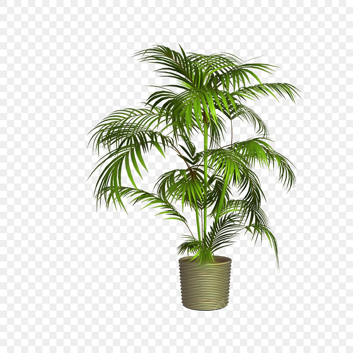Plante Haute En Pot plantes en pot plantes vertes d'intérieur illustrations de