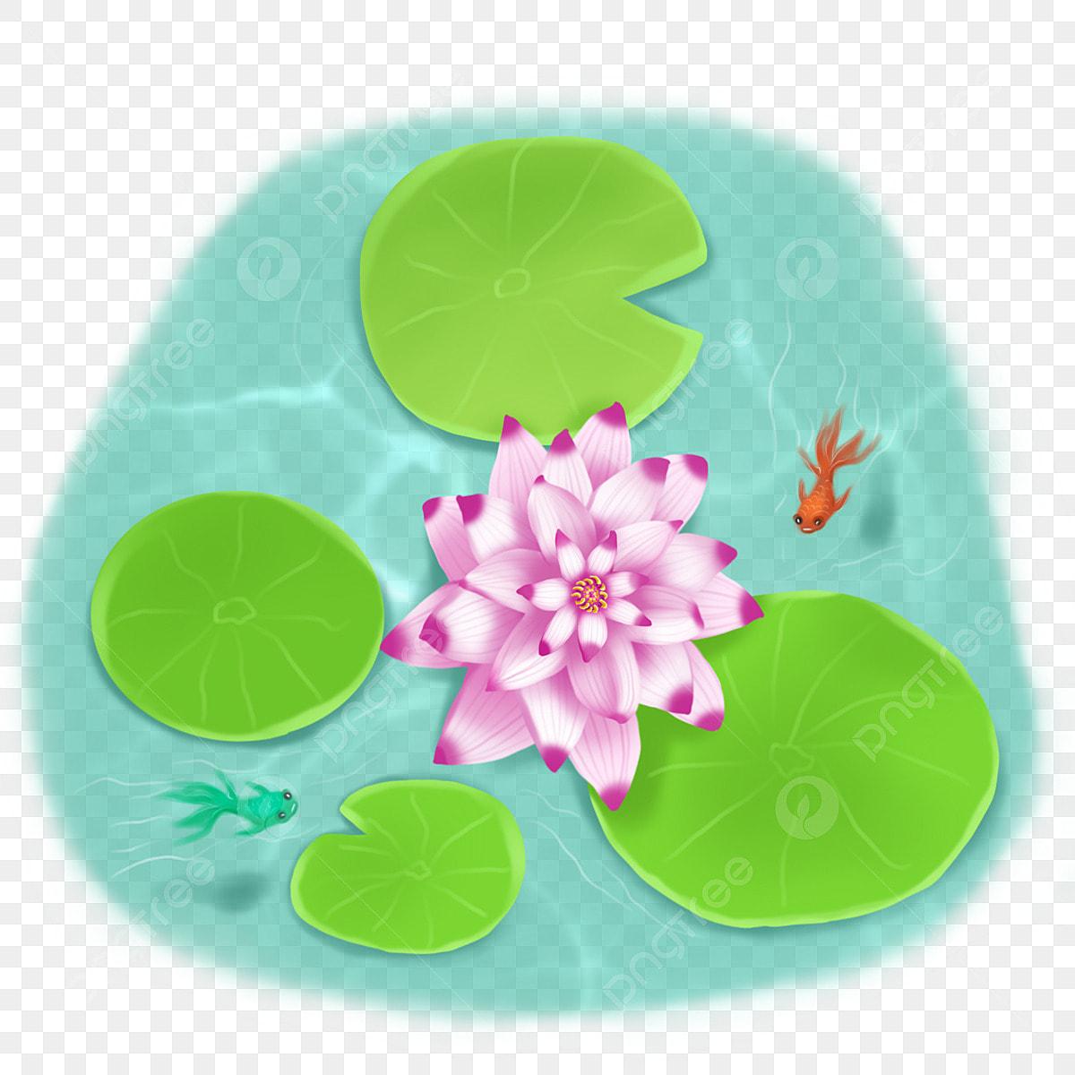 Bassin A Poisson Rouge lotus paysages de bassin de lotus de printemps et d'été