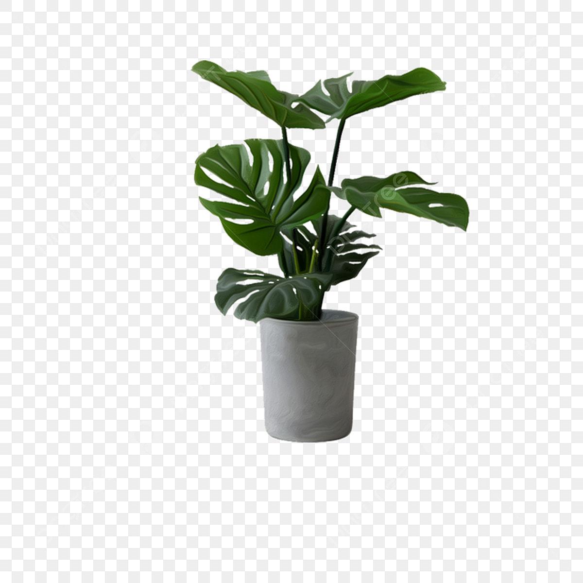 Plante Haute En Pot plante verte plante plante verte d'intérieur illustration de