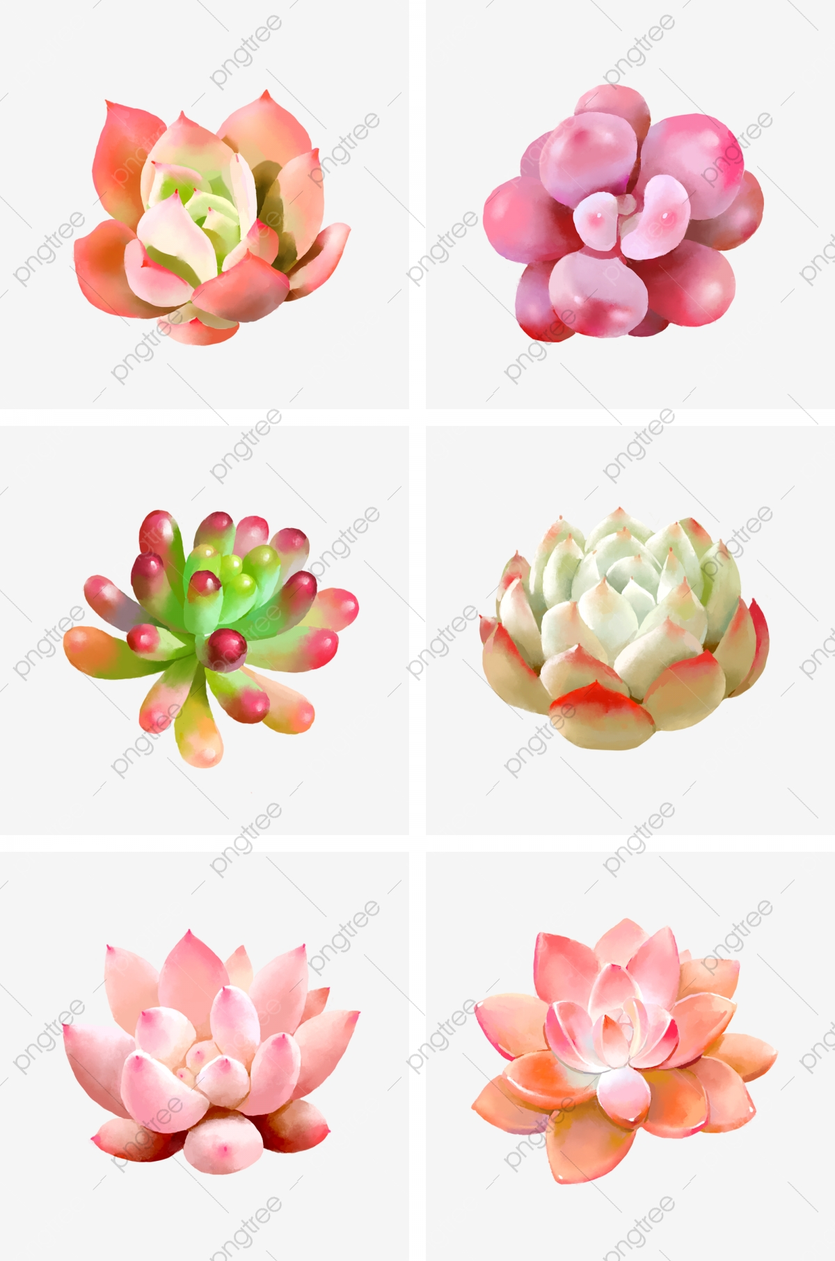 Small Fresh Hand Painted Watercolor Succulent Series Painted Fleshy Watercolor Hand Painted Small Fresh Png Transparent Clipart Image And Psd File For Free Download