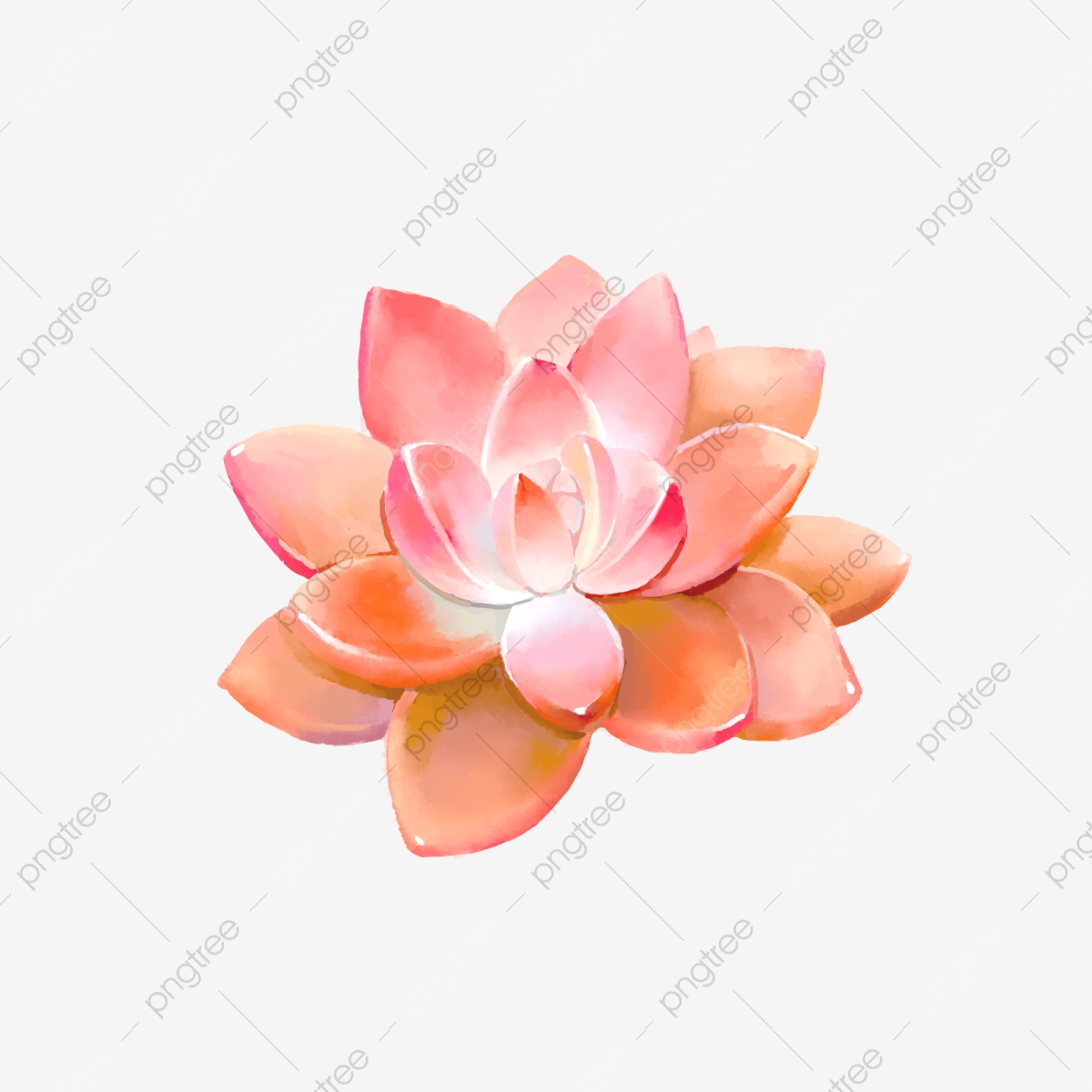 Watercolor Succulent Png Vector Psd And Clipart With Transparent Background For Free Download Pngtree