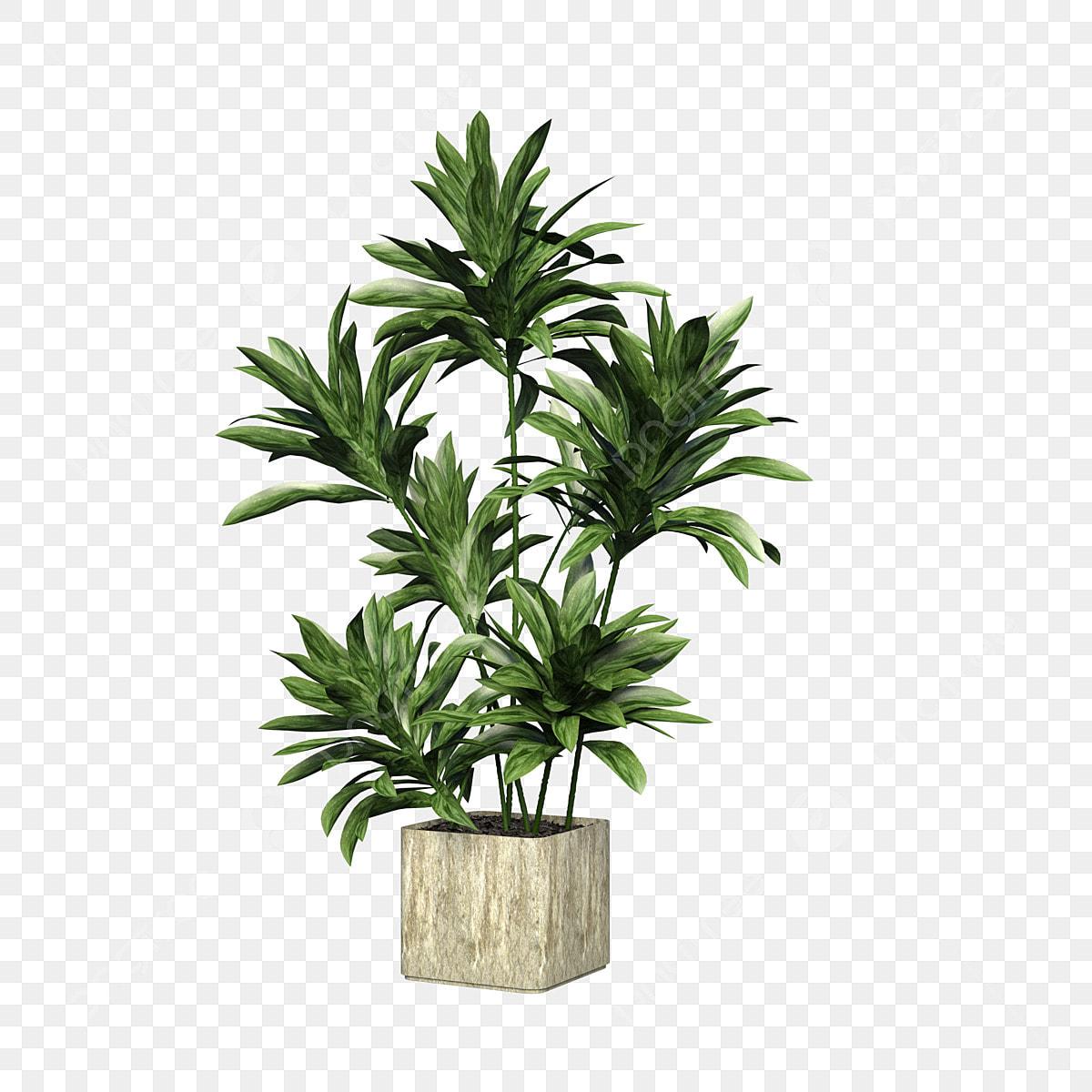 Plante Haute En Pot carré céramique pot de fleur plante verte, plante verte