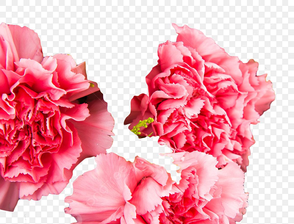Belles Fleurs Et Odorantes Fleurs Jardin Lumineux, Roses ...