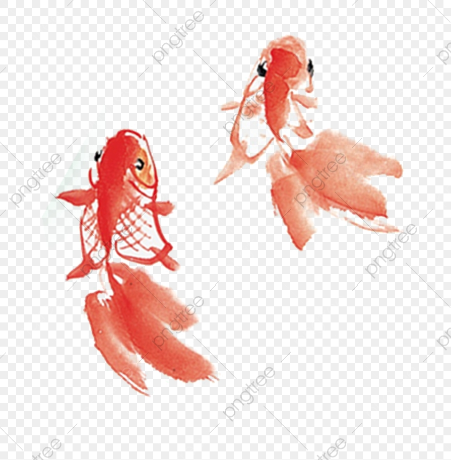 Freedom To Swim In A Fish, Swim Around, Free, Free To Do PNG Transparent  Clipart Image and PSD File for Free Download